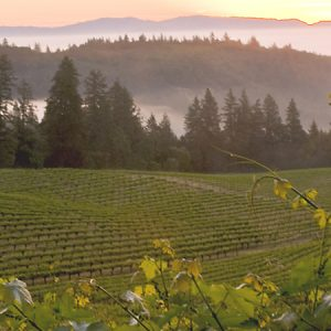Wine-Mosiaic-Vineyard-Mount_Veeder1