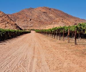 salta-77-1-1 high altitude vineyard