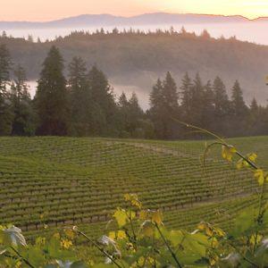 Wine-Mosiaic-Vineyard-Mount_Veeder1